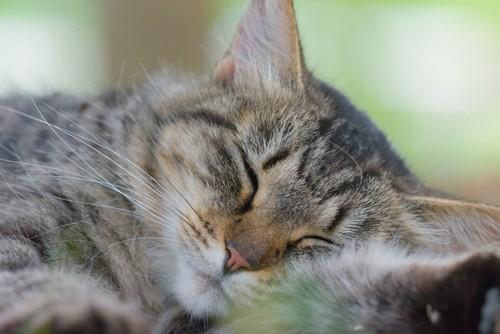 だらんと眠る猫