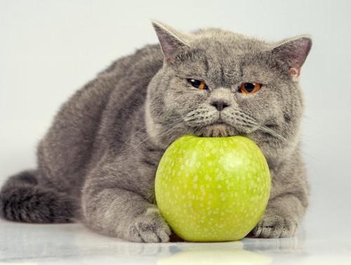 りんごに顎を乗せるグレーの猫