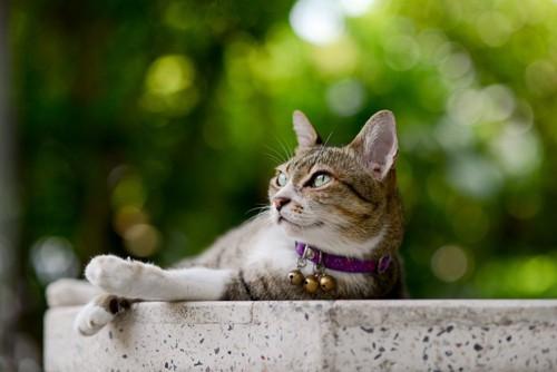 鈴がたくさんついている首輪の猫