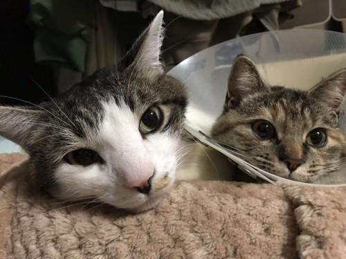 他の猫とも仲良しです2