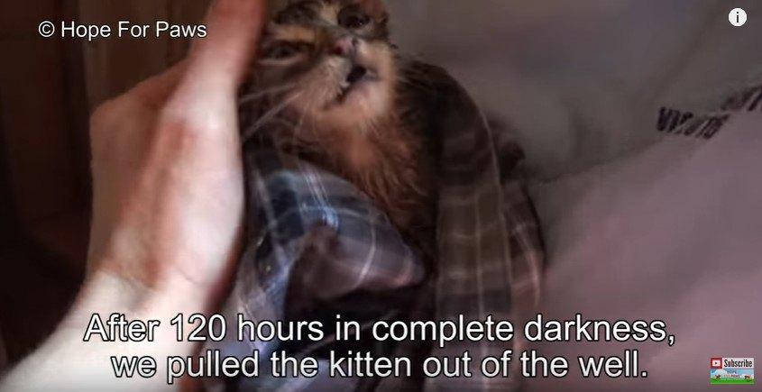 救出直後の子猫