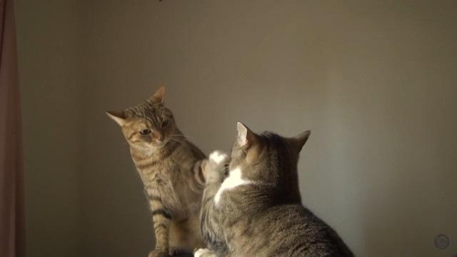 握手をする猫