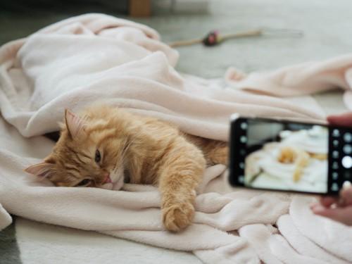 寝ている猫をスマホで撮影する人の手