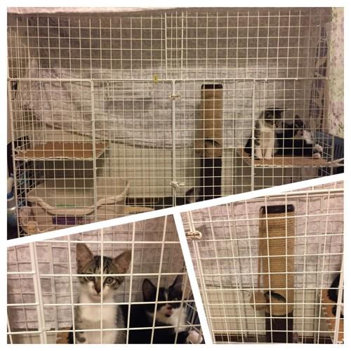 保護猫ちゃん3匹訪問