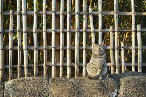 石垣の上に座る猫