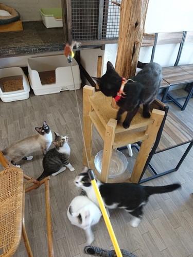 猫のへや店内のキャットタワーで遊ぶ猫たち
