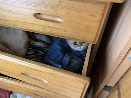 箪笥の中の猫トラップ