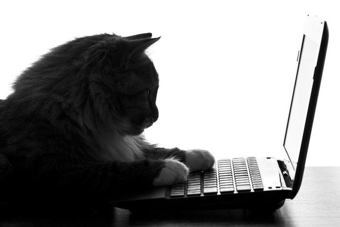 PCのキーボードを触る猫