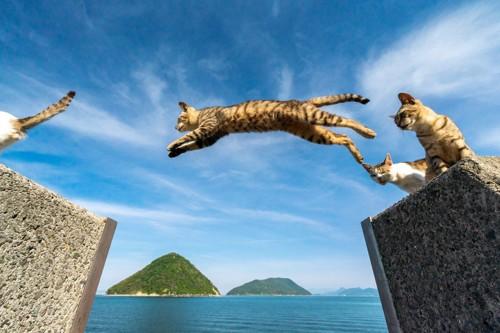 猫がジャンプする海辺