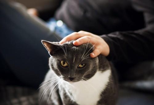 頭を撫でられる白黒の猫