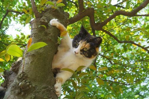 木の上から下を見つめる猫
