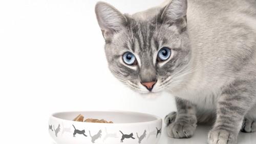 餌とグレーの猫