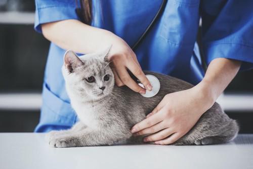 病院で聴診器を当てられている猫