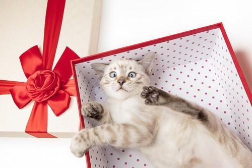 プレゼントの箱の中に入る猫