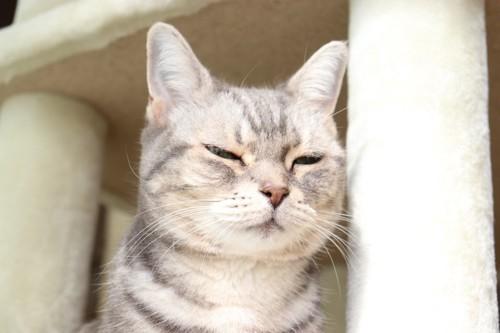 キャットタワーで目を細める猫