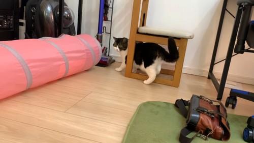 椅子の下に入る猫