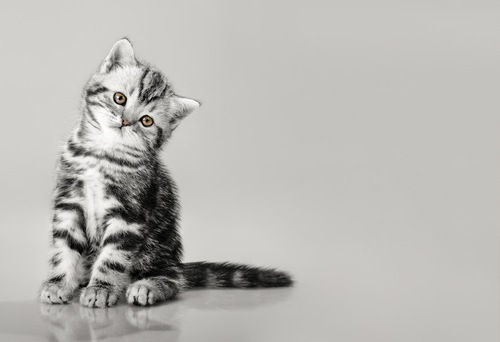 寂しそうな子猫