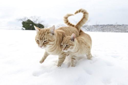 尻尾でハートを作り寄り添う二匹の猫