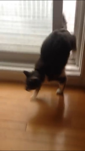戻ってきた猫