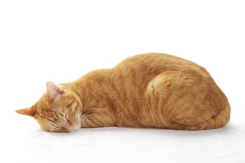 床に顔をつけて眠る茶トラ猫