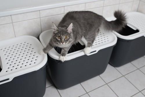 トイレから走り去ろうとする猫