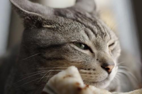 眠そうな表情で薄目を開ける猫