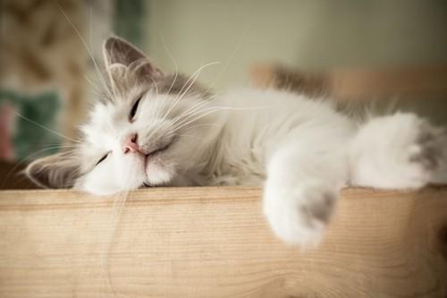 テーブルの上で眠る猫