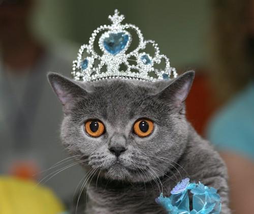 ティアラをつけた猫