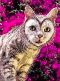 珍しい柄猫10