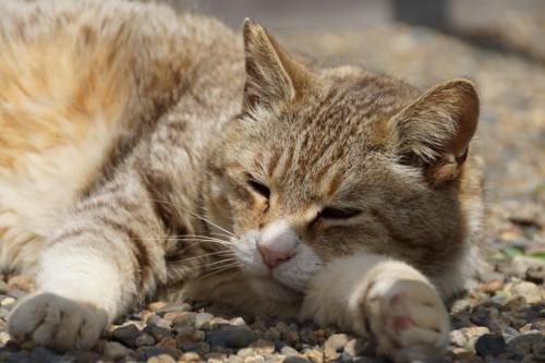 すねて寝る猫