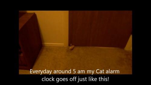 ドアの下から猫の手
