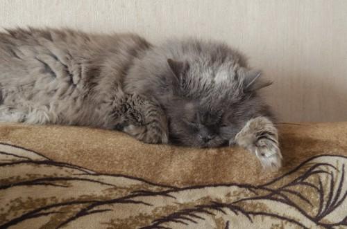 寝ている元気のない猫