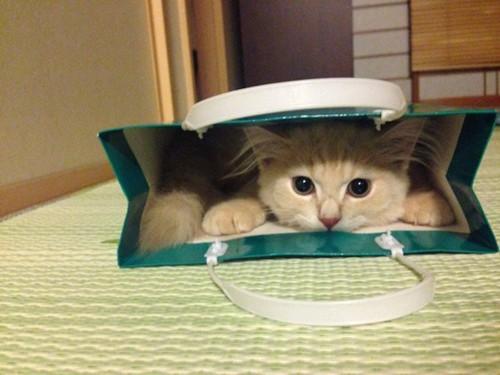 紙袋に入ってこちらを見つめるきなこくん