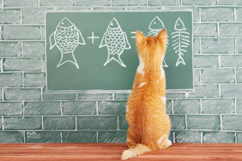 黒板に書かれた魚の絵を見つめる子猫