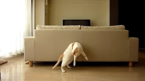 後ろ足で立ち後方を見る猫