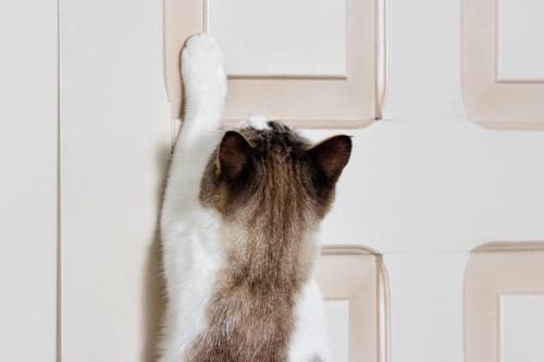 扉を掻く猫