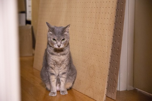 ストレスを感じている猫