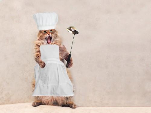 料理人の格好をした猫