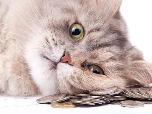 お金の上に顔を乗せる猫