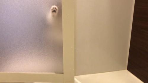お風呂のドアを猫の前足