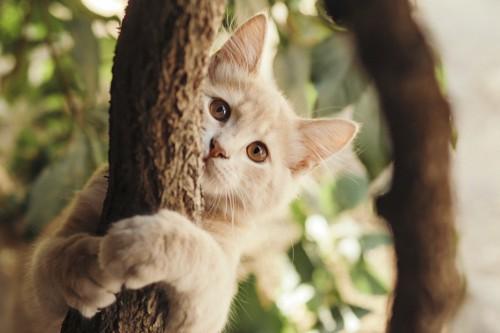 木の幹にしがみついてこちらを見る猫