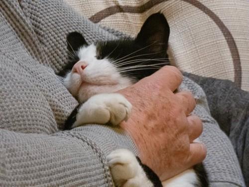 飼い主に抱かれて幸せそうに眠る猫