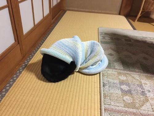 #キャットトンネルに飛び込んだ猫#