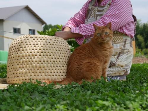 畑で猫ちぐらの横にいる猫
