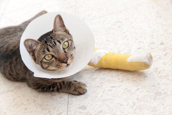怪我をした猫