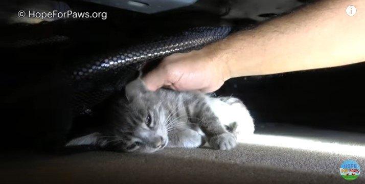 重体の子猫