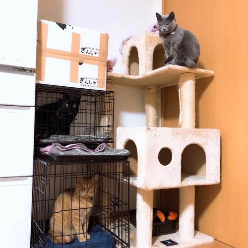 我が家の猫3匹の食事位置