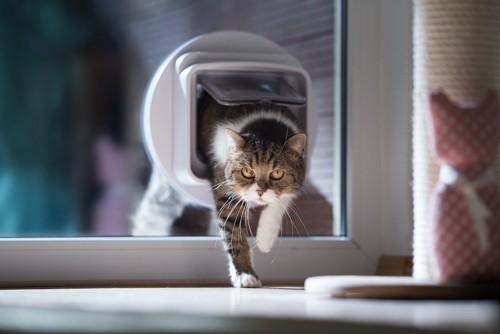 キャットドアを通って部屋に入る猫