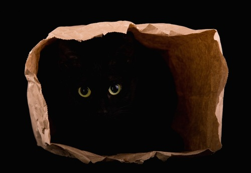 紙袋に隠れる黒猫