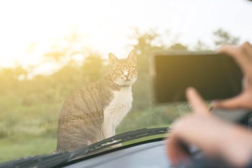 写真を撮られている猫